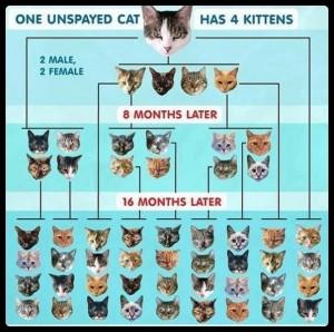 Kitten chart